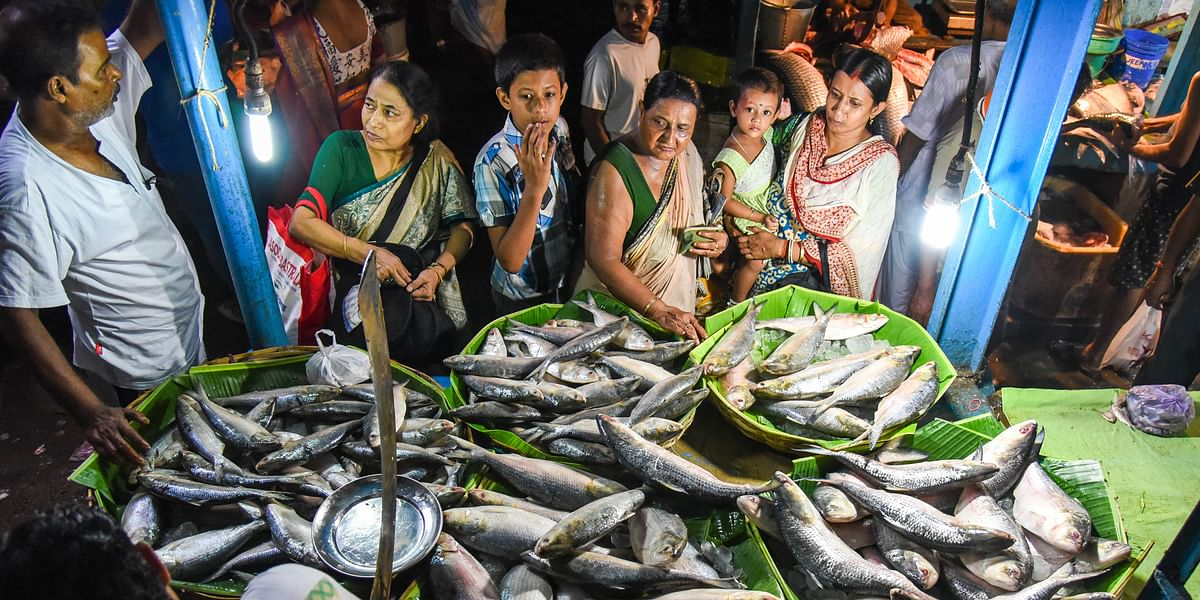 Huge quantities of hilsa fish have reached Kolkata market. Demand for hilsa in Bengali cuisine is always high.