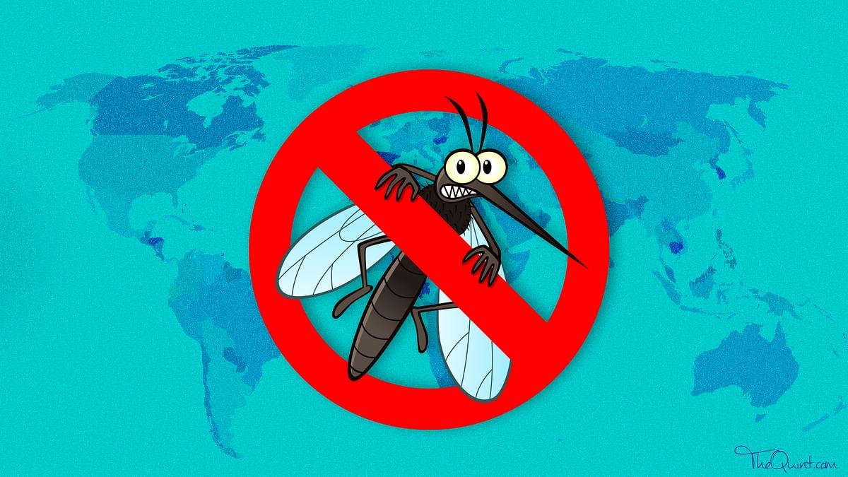 Can Anti-Malaria Drug Chloroquine Really Help Treat Coronavirus?