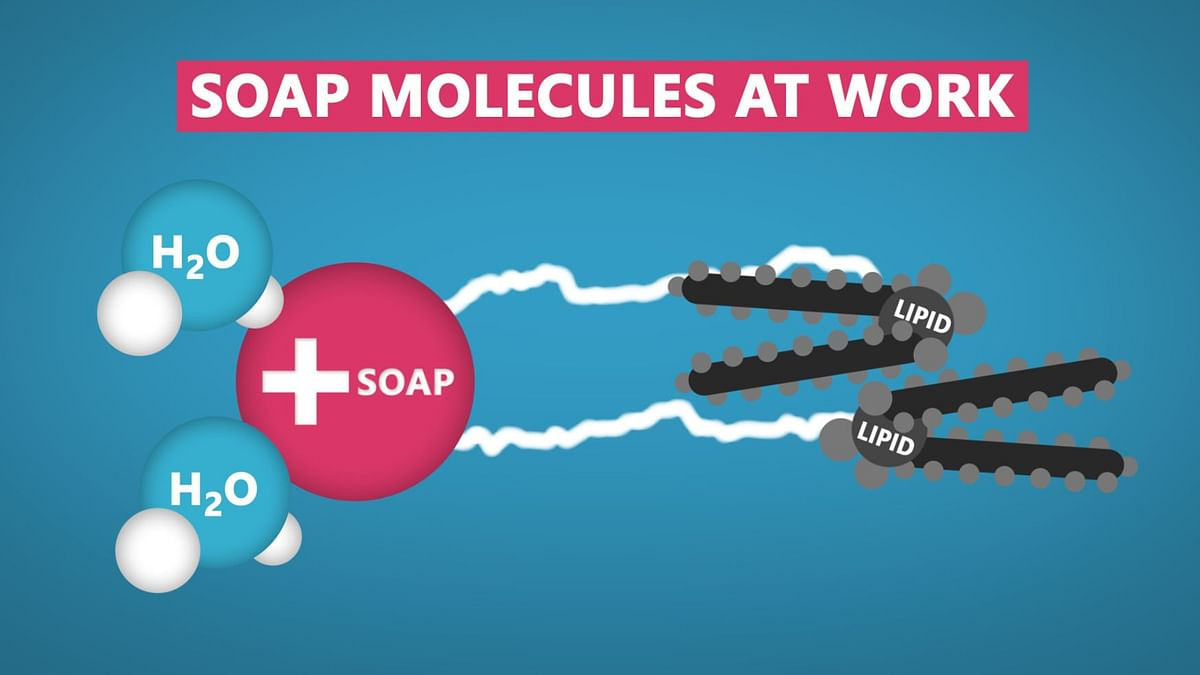 How Soap Destroys Coronavirus