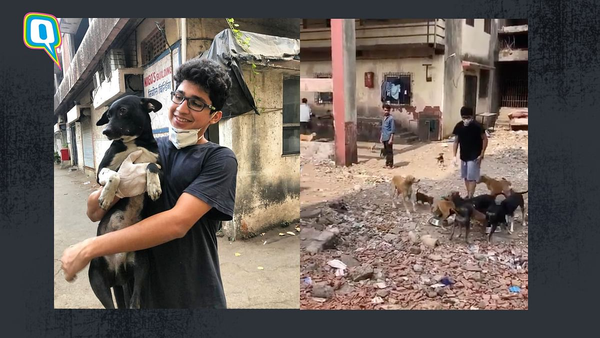 This Mumbai Boy Is Feeding Stray Animals Every Day Since Lockdown