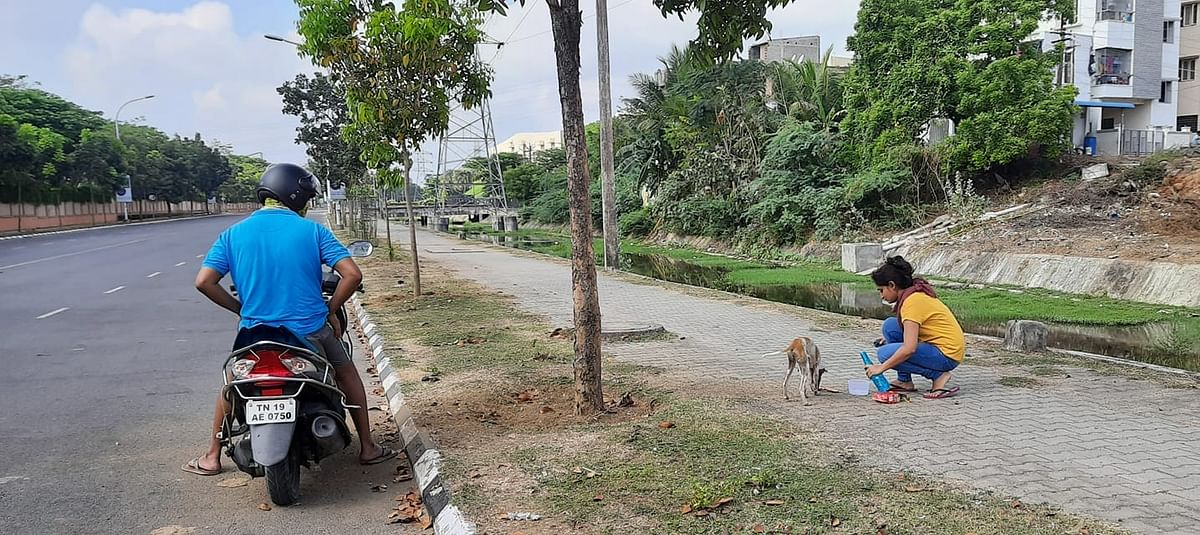 a samaritan feeding a stray at Mahindra City near Chennai.