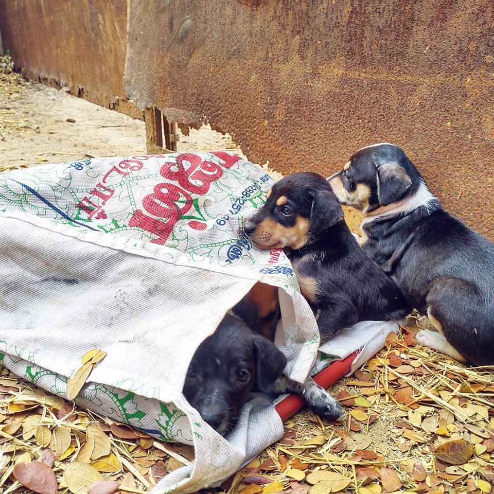 puppies dumped in Chennai, during the lockdown.