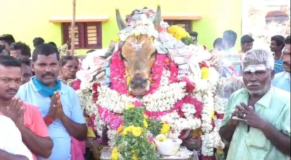 The villagers said that the bull was a deity to them and they didn't want to let anything to stop them from giving the bull the farewell it deserved.