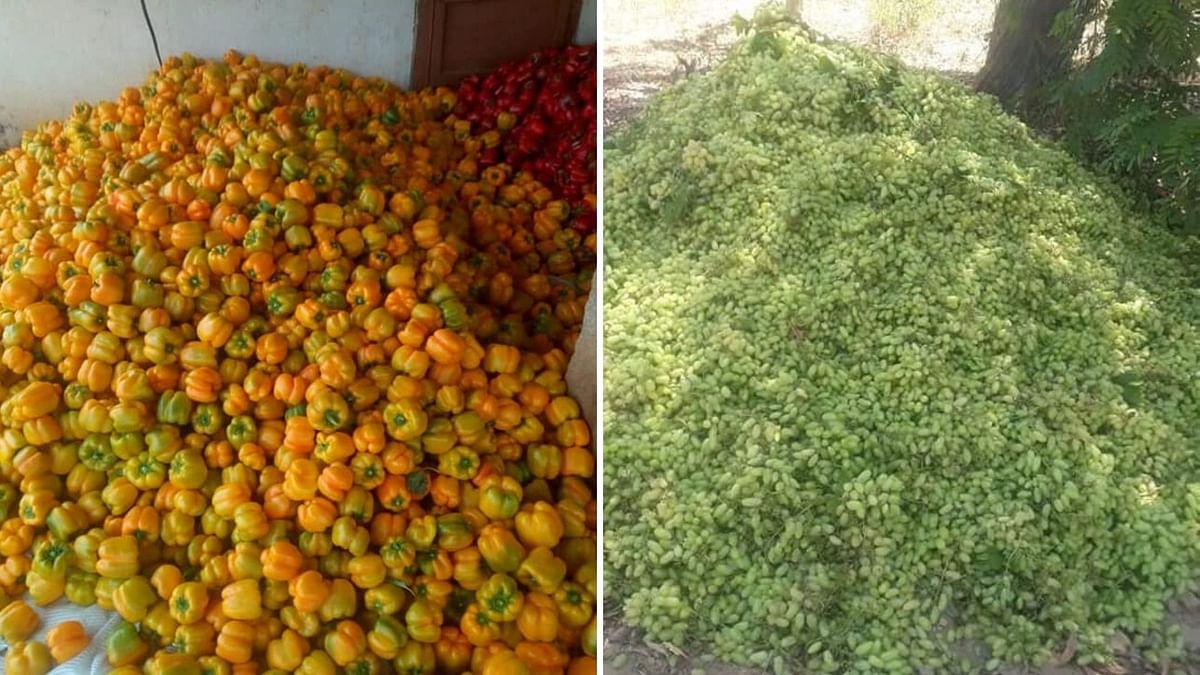 COVID-19: Karnataka Farmers Dump Produce as Supply Chain Snaps