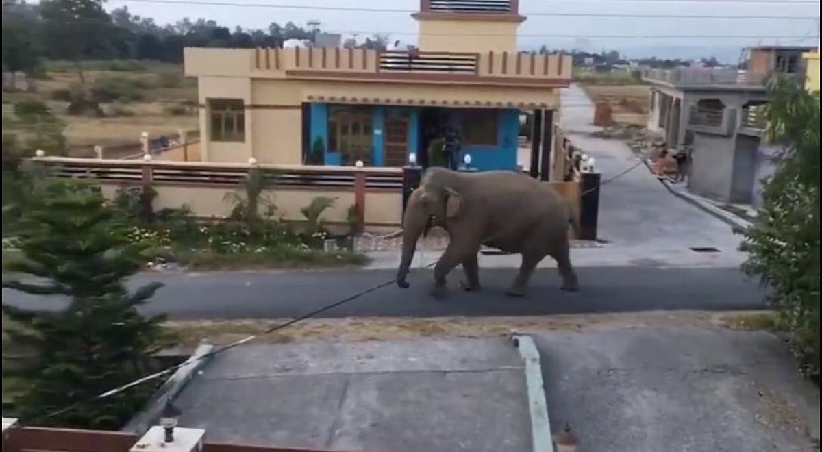 Animals enjoy the streets while humans stay at home