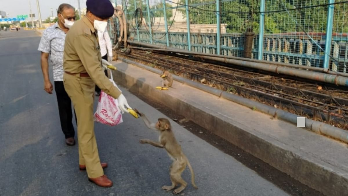 COVID-19: Amid Lockdown, Lucknow Police and NGOs Feed Monkeys