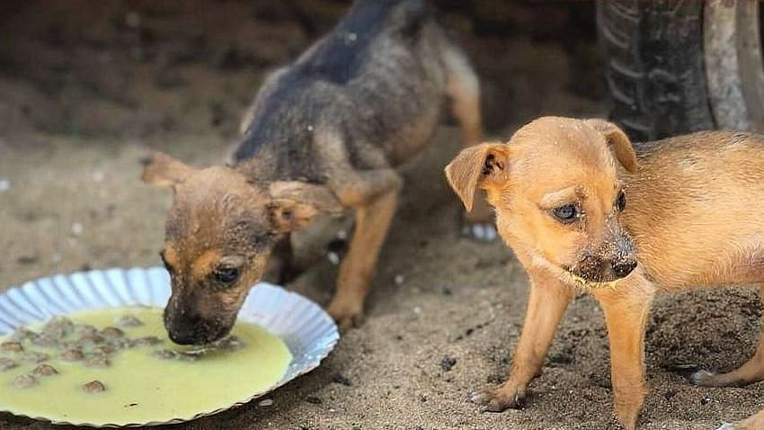 Chennai's strays have been abandoned by some, but taken care of by a huge army of volunteers.