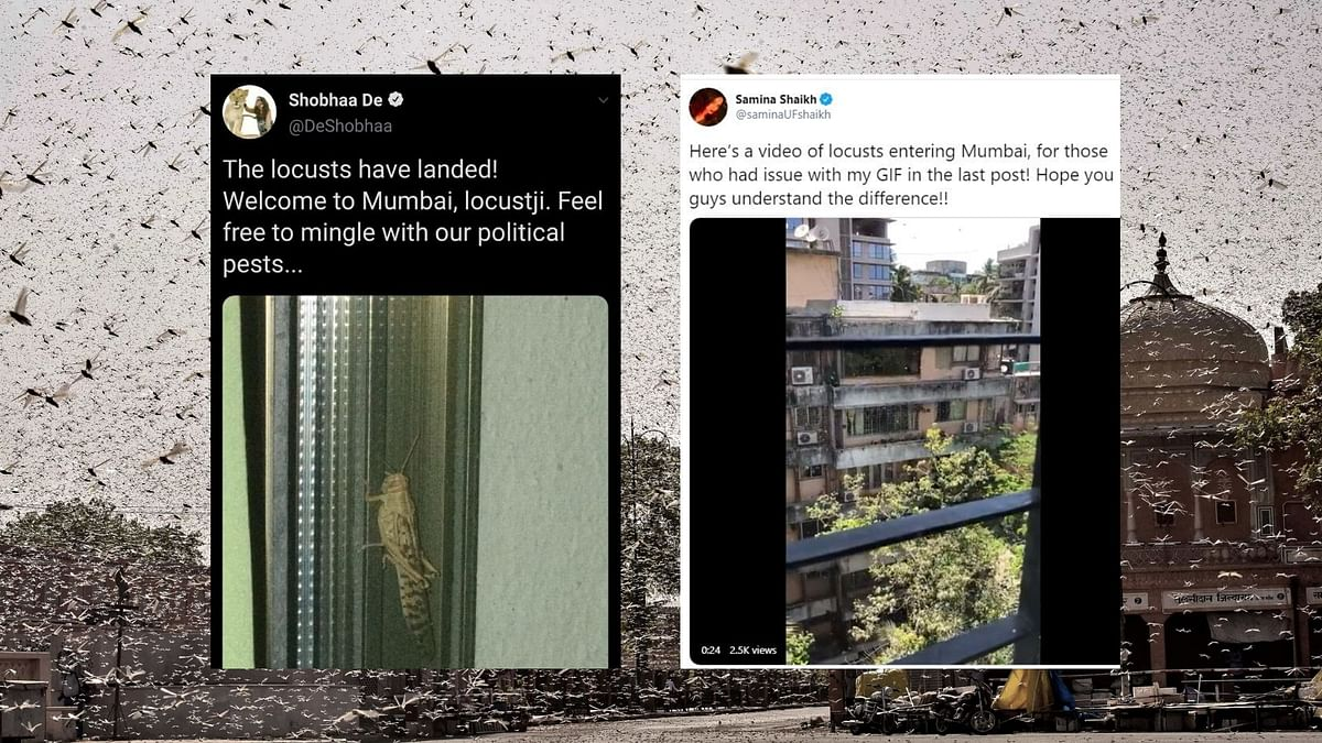 Several Mumbaikars on Thursday, 28 May, posted images and videos of a locust attack in Mumbai.