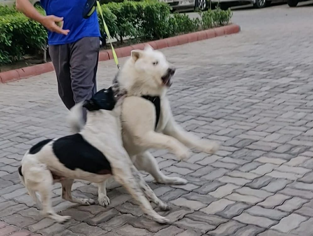 A stray dog attacking resident's dog.