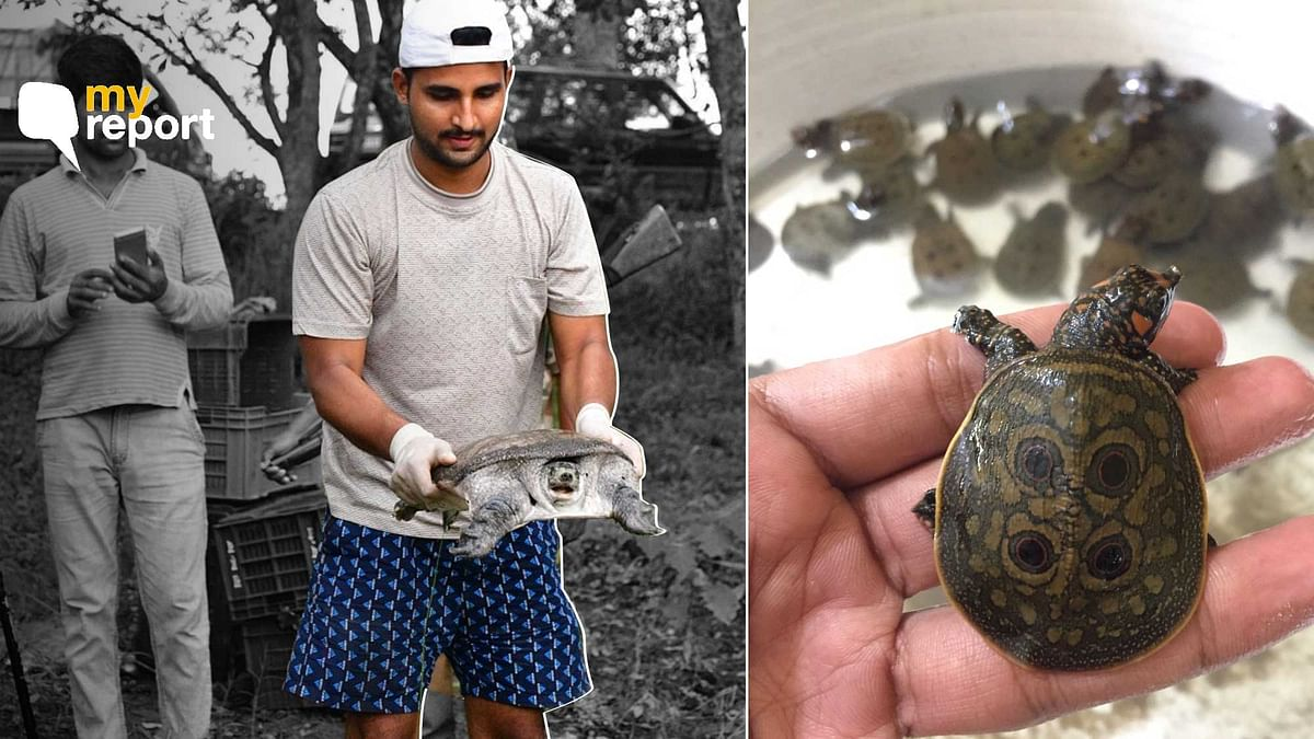'On the Search for Assam's Endangered Black Softshell Turtle'