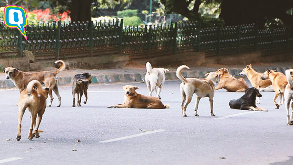 Chennai Woman Eats Only One Meal A Day To Feed Her Dogs