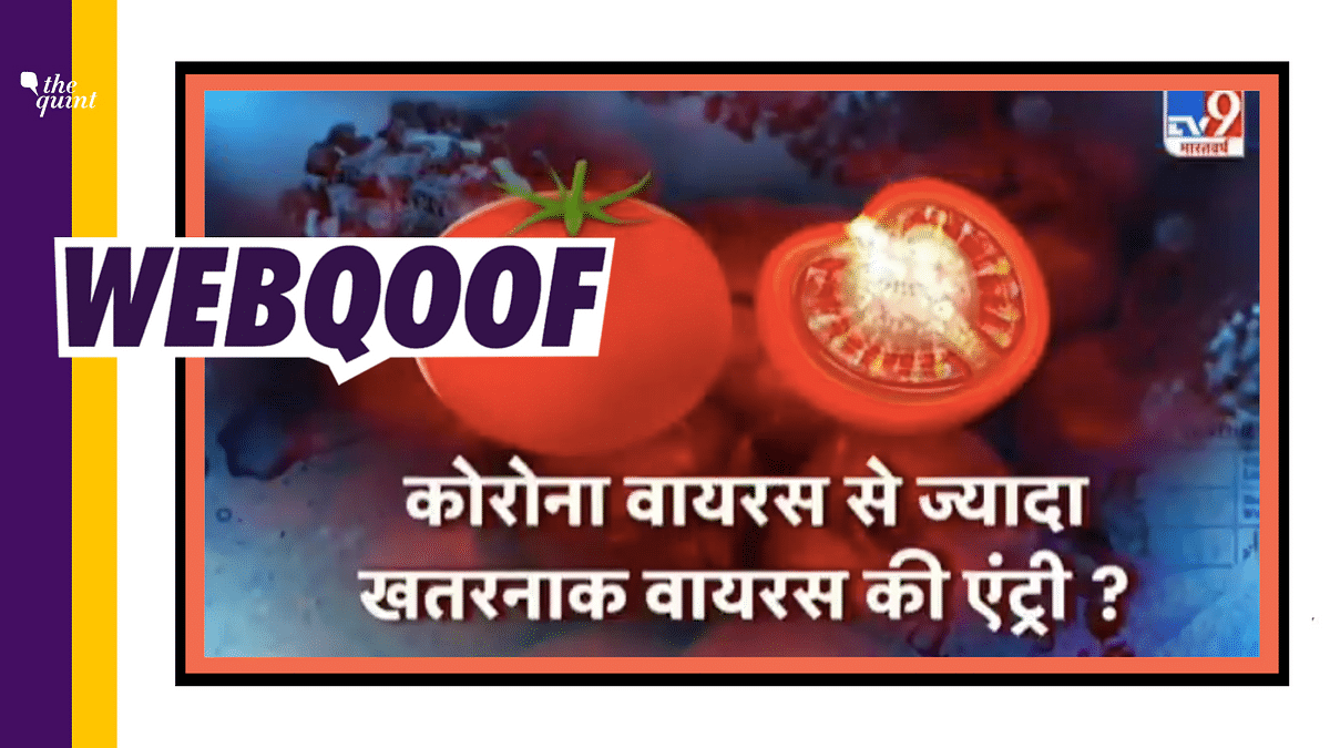 TV9 Bharatvarsh Falsely Claims Tomato Virus Worse Than COVID-19