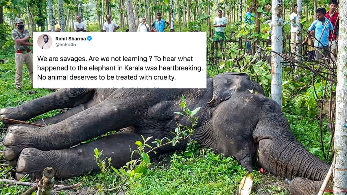 We Are Savages, Are We Not Learning: Rohit on Elephant's Killing