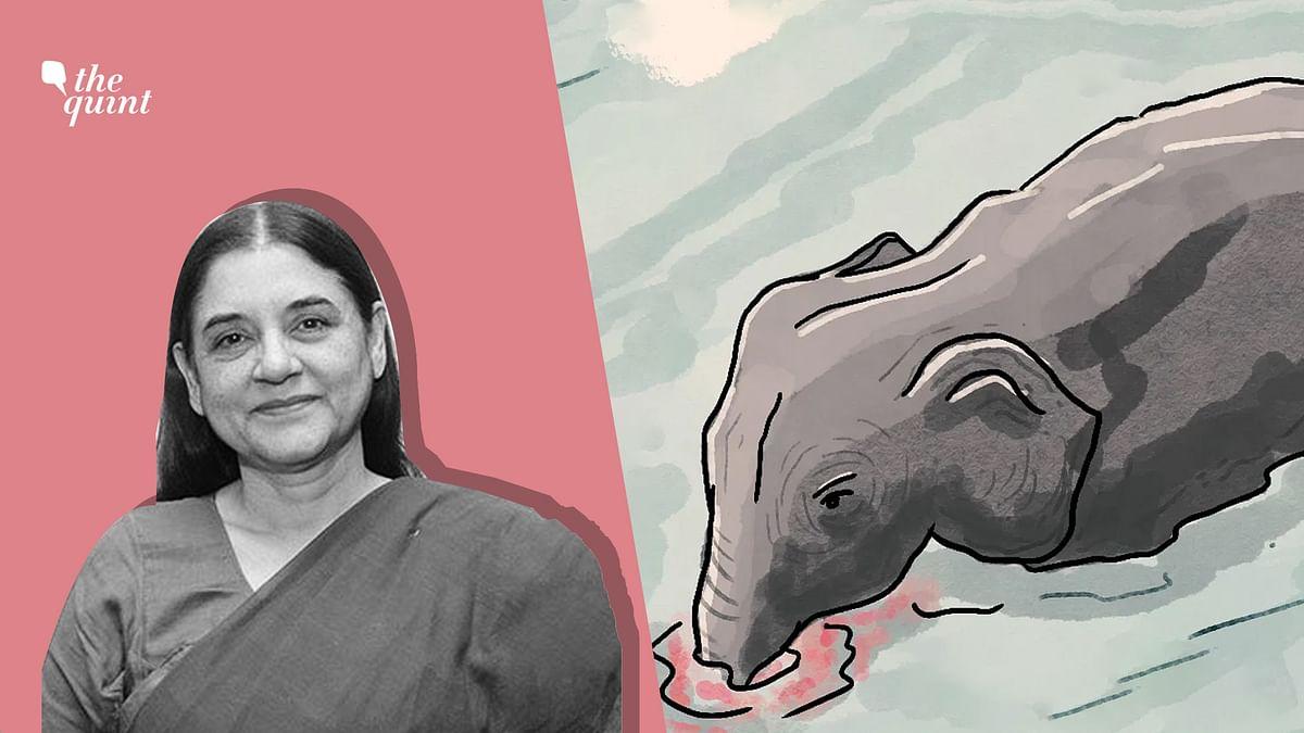 Kerala Elephant Death: How Malappuram & Muslims Got Wrongly Blamed