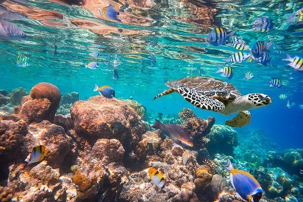 Maldives Indian Ocean coral reef.