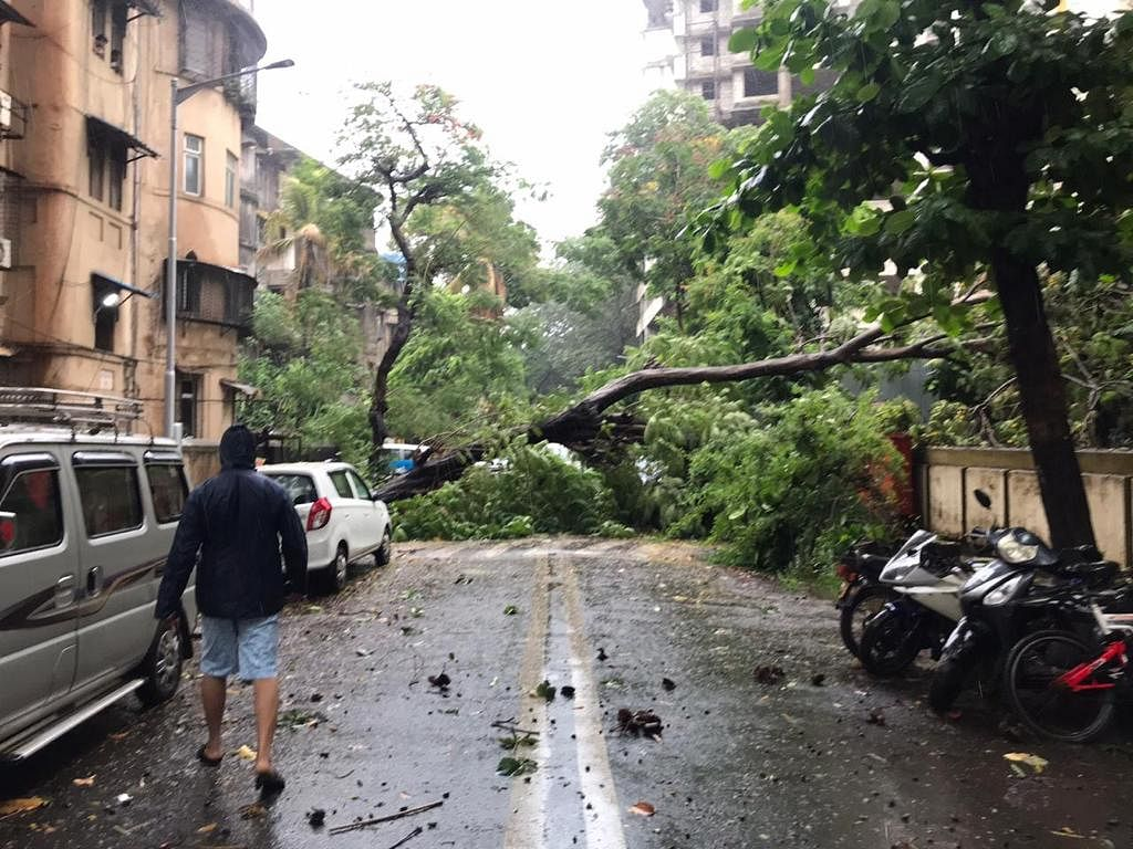 A tree uprooted as Cyclone Nisarga hit Mumbai.