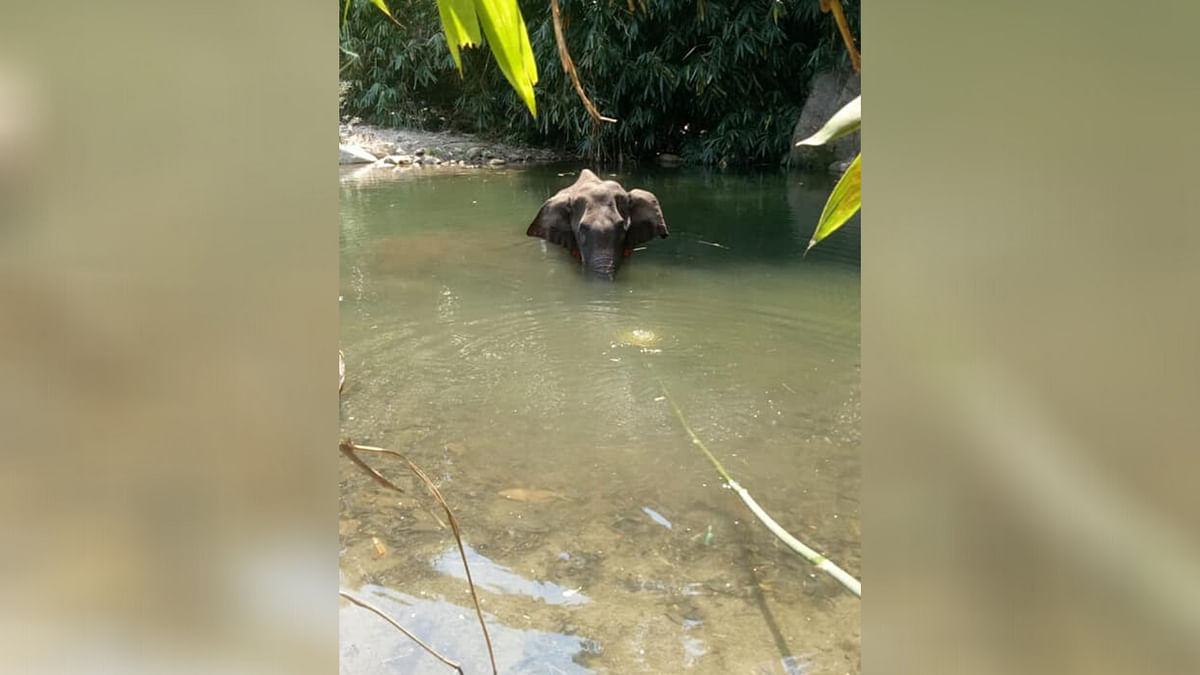 A pregnant elephant died in Kerala, standing in water, on 27 May, after she ate a fruit that was stuffed with explosives, allegedly left by some locals.