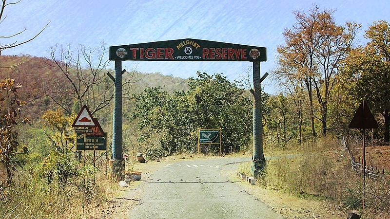 How Forest Rights Made This Maharashtra Village 'Atmanirbhar'