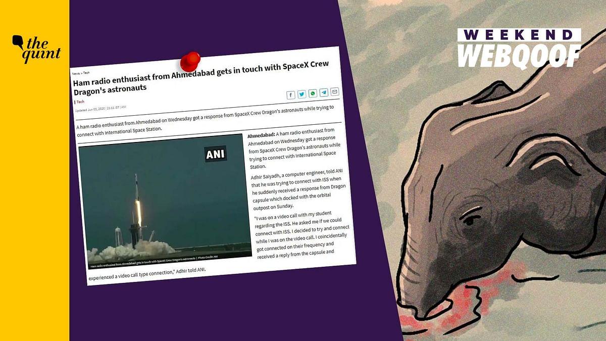 WebQoof Recap: Of Kerala Elephant Death & COVID-19 Spread