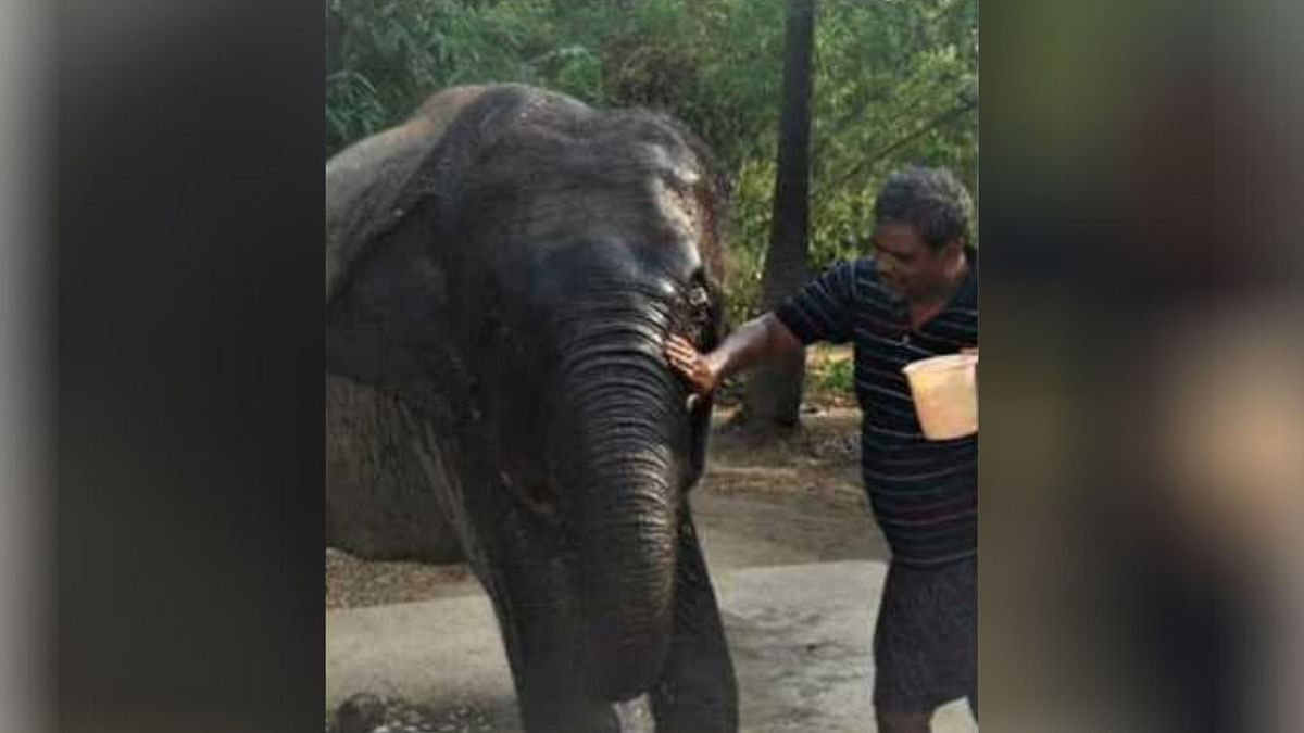 Bihar Man Bequeaths 6.25 Acre Land to  Elephants As They're Family