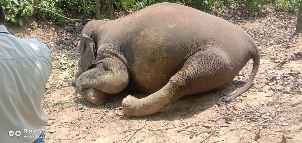 Earlier, another pregnant elephant had died in Kerala.