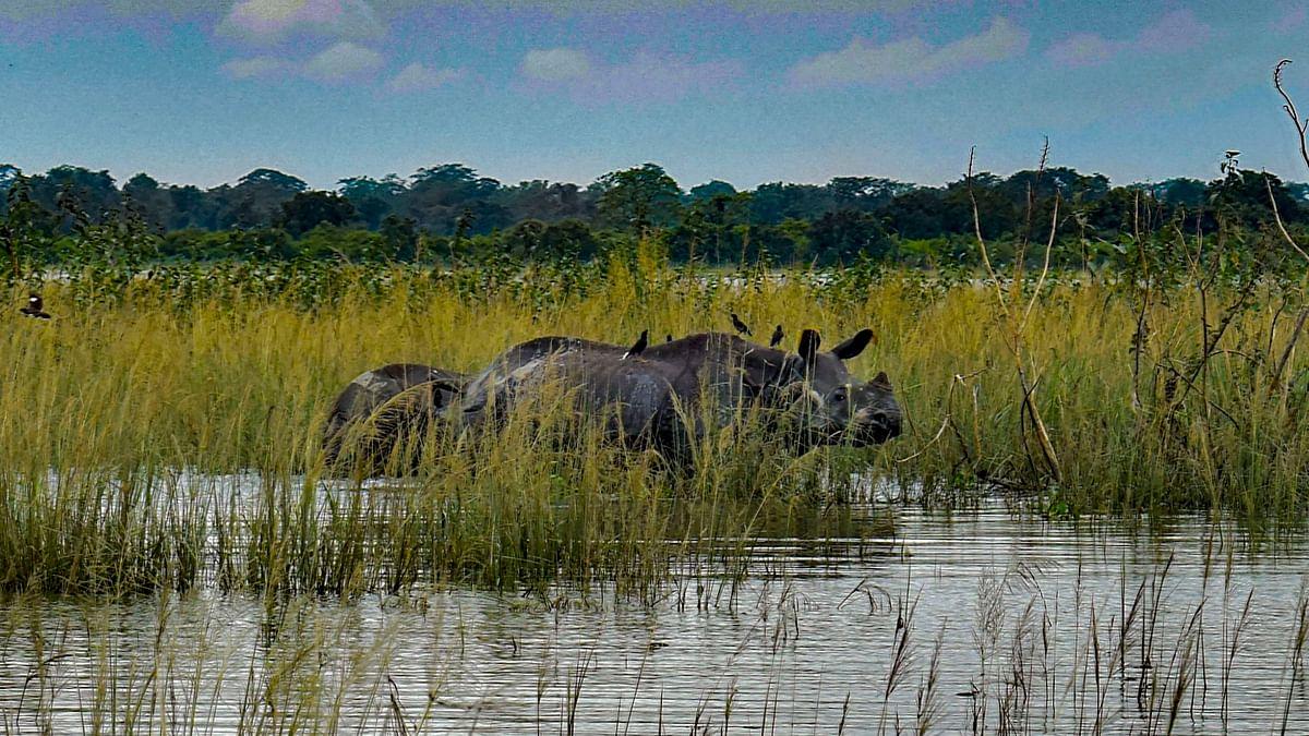 Floods: 98 Deer, 14 Rhinos Among 132 Animals Dead in Kaziranga