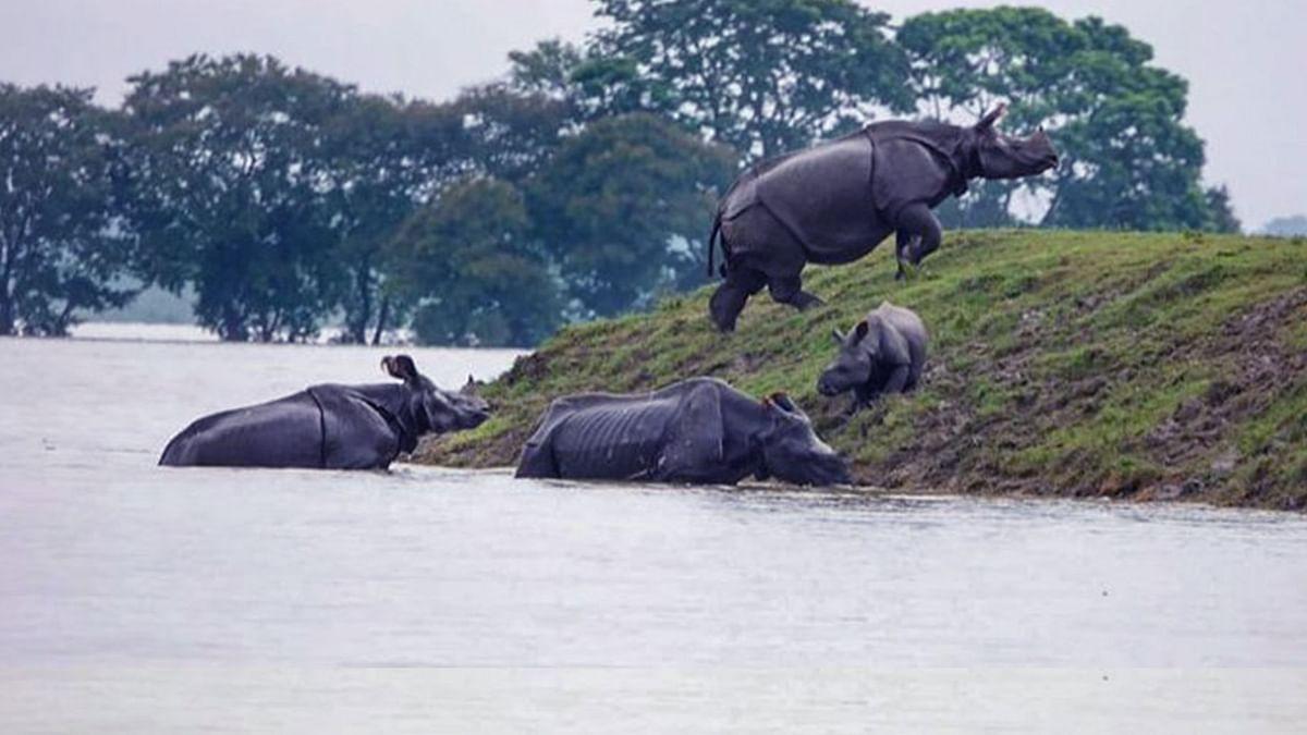 Assam Floods: Close to 95% of Kaziranga National Park Submerged
