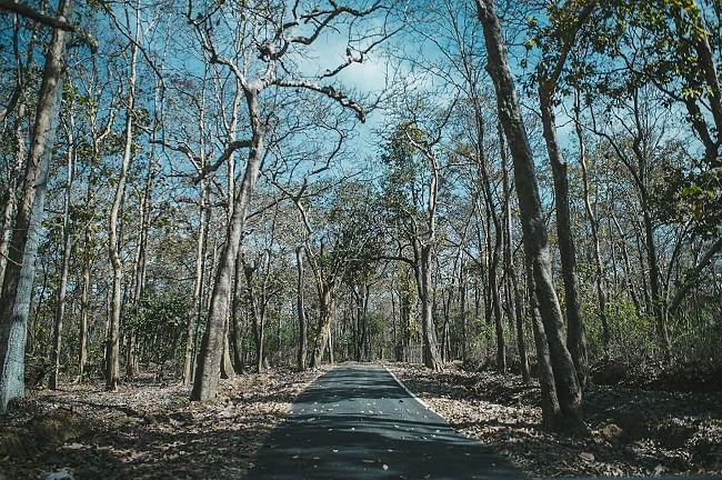 Siddi community members live in forested areas in Uttara Kannada district of Karnataka.