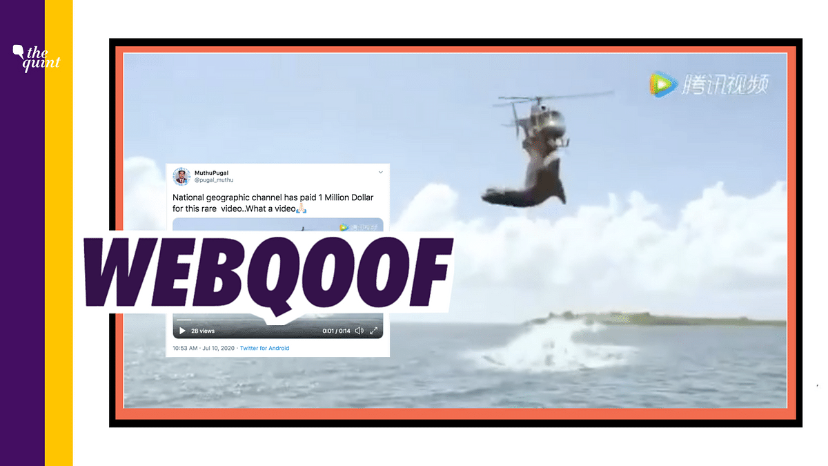 Nat Geo's Video of Shark Attack? No, It's a Clip From a 2017 Film!