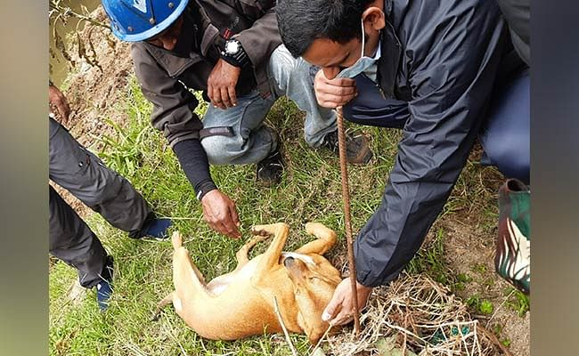 Dog Looking for Owner Helps Find Child's Body in Idukki Landslide