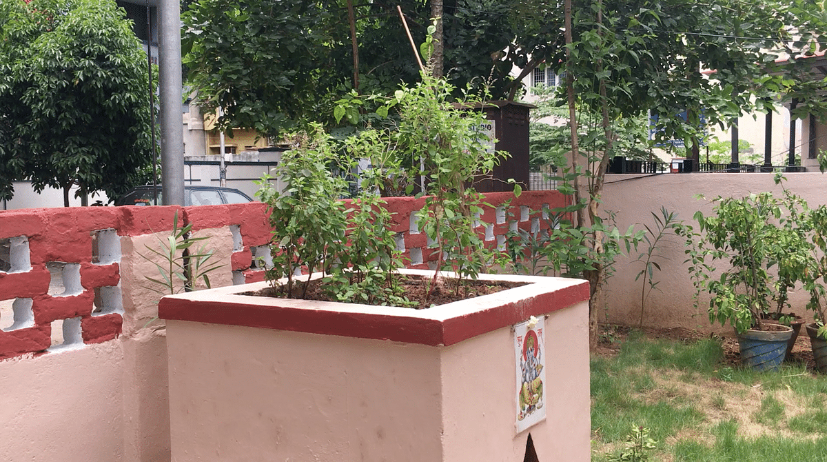 A tulsi is mandatory in most homes back in the day. While it is worshipped, eating a few leaves is a daily habit.