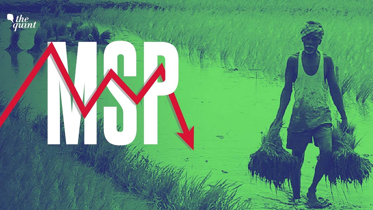 Understanding MSP and why it is at the heart of the protests against the Farm Bills.