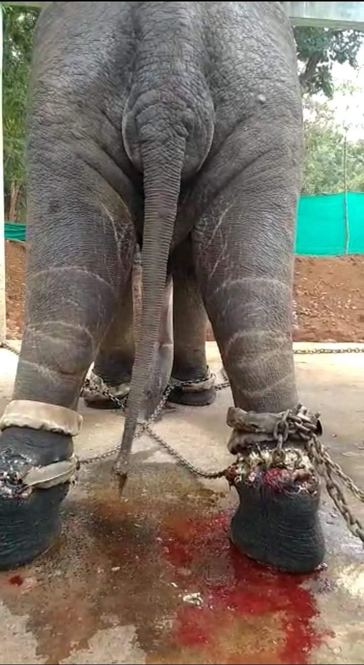 The picture taken in March shows how injured Rakesh was.