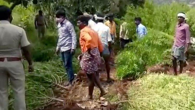 Karnataka Police Unearth Four-Acre Marijuana Farm, Seize 9,872 Kg