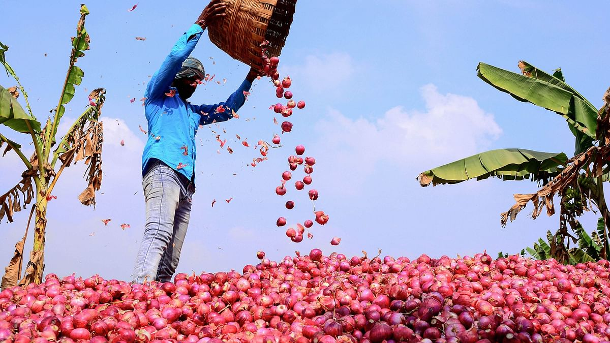 Centre Bans Exports of Onions; Pawar Asks Goyal to 'Reconsider'