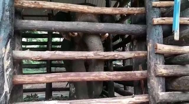 Rakesh has now been kept in an enclosure with no space to move.