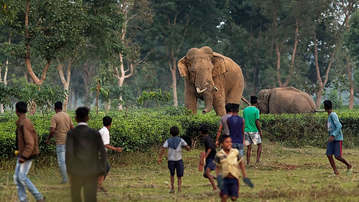 Villagers of Bijaynagar tea garden near Naxalbari watch as a herd of wild elephants walk towards them. Between 2014 and 2019, 2,361 humans were killed as a result of conflict with elephants, while 510 elephants were killed at the same time.