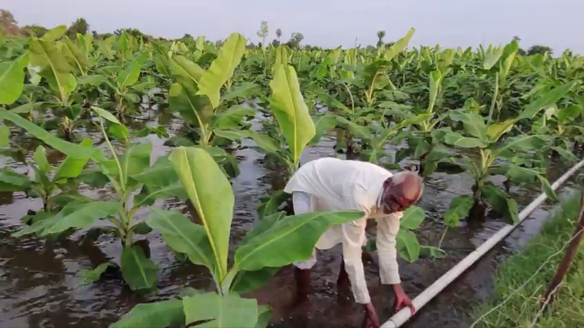 Maharashtra: Farms Flooded, Crops Wasted, Farmers Seek Govt Relief