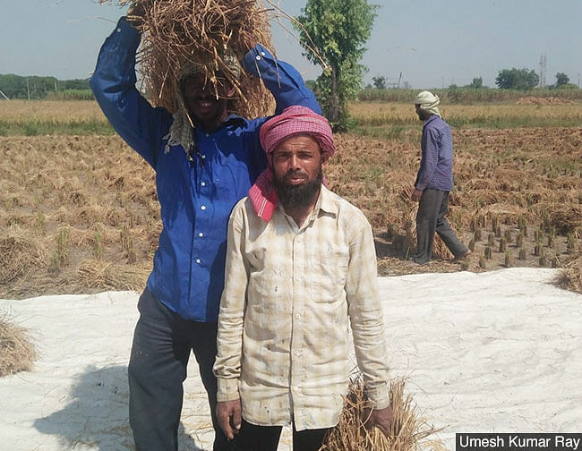 The COVID-19 lockdown forced painter Mohammad Raqib, 57, (centre) to return home to Dumaria, Bihar from Delhi. Unable to find work for four months, Raqib could not find painting work again in Delhi either. He now harvests rice in Karnal, Haryana