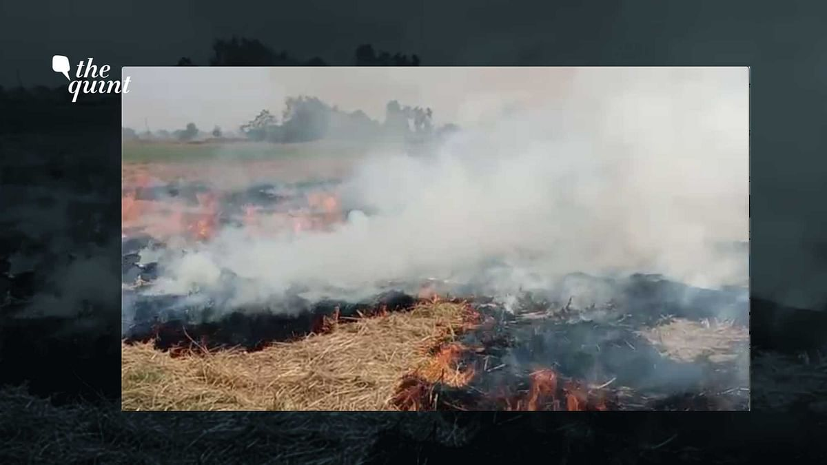 Stubble Burning: Punjab Farmers Blame Govt As Air Quality Worsens