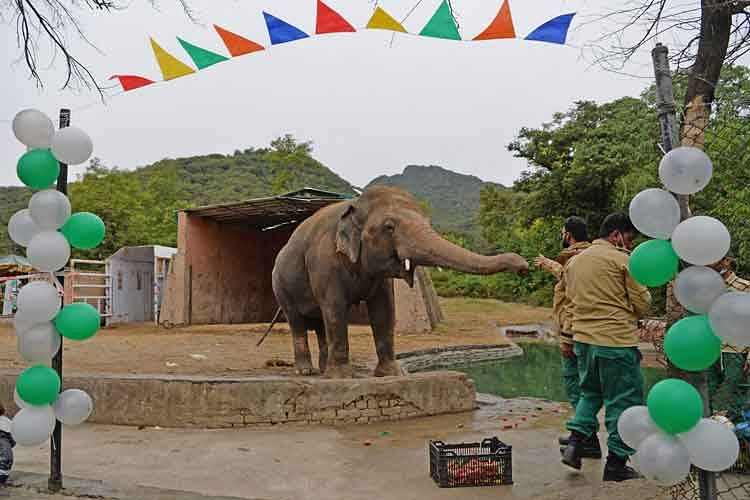 Pakistan's Lonely Asian Elephant Kaavan Gets a Farewell Party