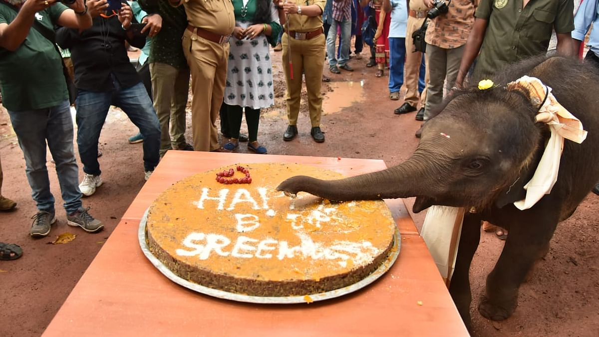 This 1-Year-Old Elephant Celebrating Her B'Day Is Adorable AF
