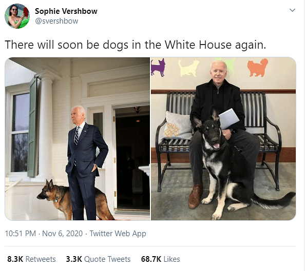 White House Preps For Joe Biden's Rescue Dog, Twitter Cheers DOTUS