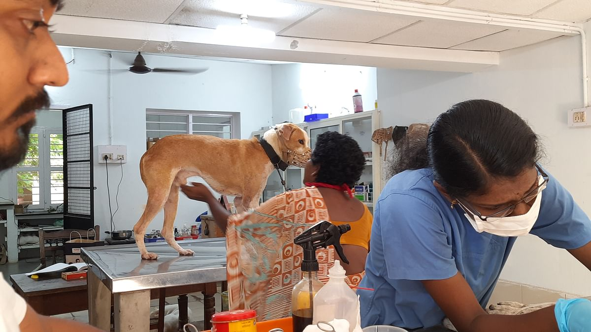 Shravan's team has been on their toes in the wake of the coronavirus pandemic as many pets were found abandoned.