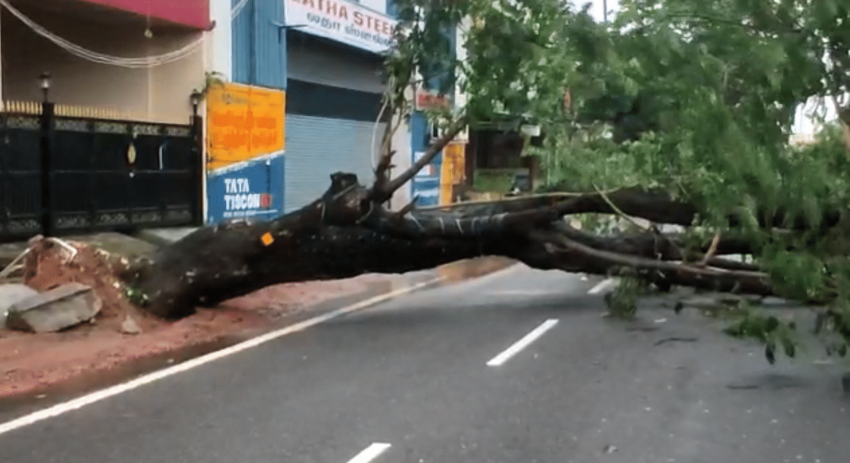 Over 267 trees have fallen in Chennai due to the cyclone.