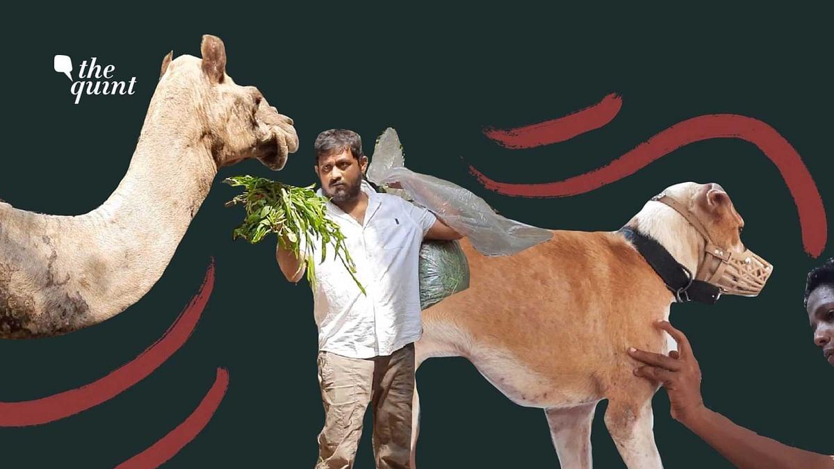 COVID No Bar for Chennai's Shravan When It Comes to Saving Animals