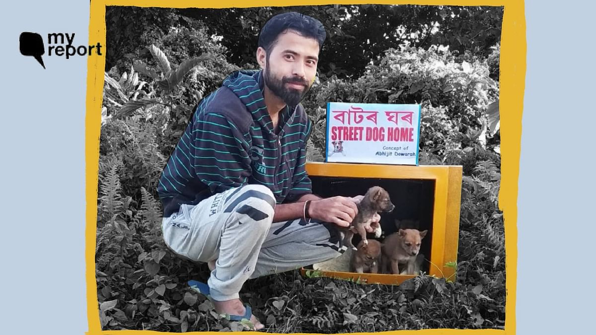 'Building Kennels Out of TV Sets as Shelter for Strays in Assam'
