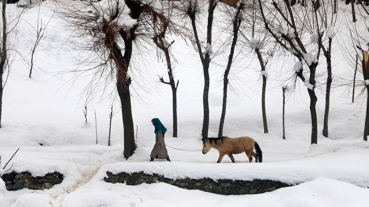 In Photos: Dal Lake Freezes as Cold Wave Sweeps Kashmir Valley