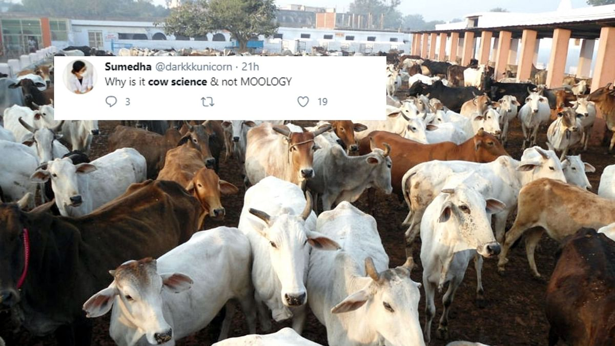 Need Sex Ed, Not Cow Science: Netizens  React To 'Gau Vigyan' Exam