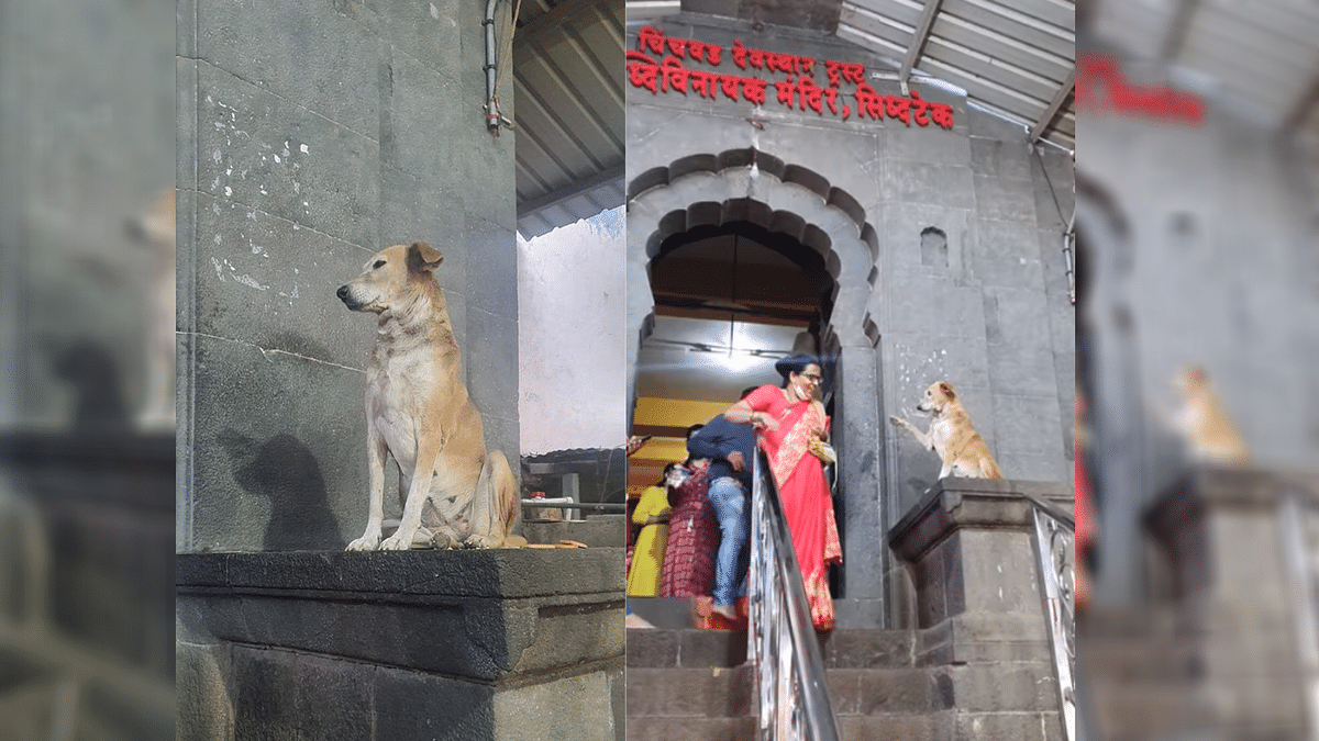 Netizens Are Loving This Dog That Blesses Devotees at Maha Temple